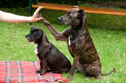 Physiotherapie Tierklinik Hutter