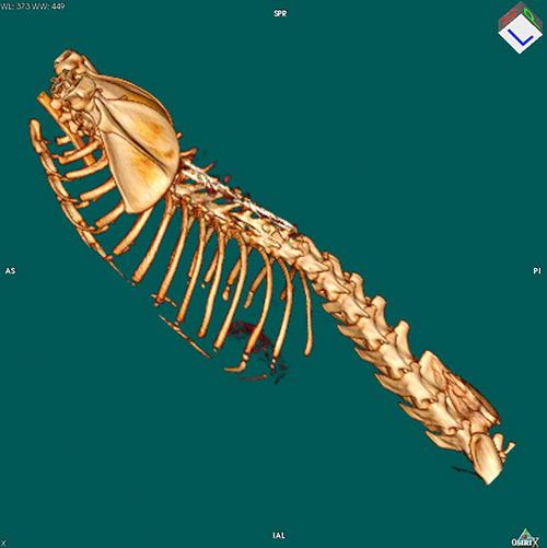 CT Bild Wirbelsäule Tierklinik Hutter
